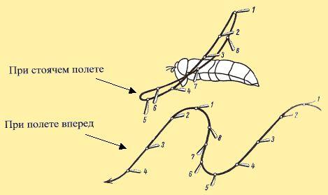Схема пропеллирующего движения