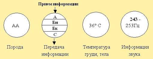 Рис. 9. Модули среднего отдела пчёл. PASEKA-RU.NAROD.RU