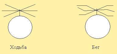 Рис. 9. Модули среднего отдела пчёл. BEEMOD.NAROD.RU