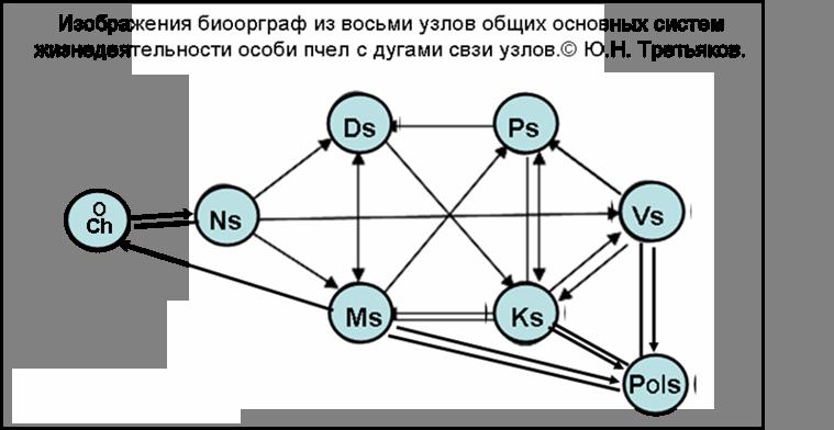 Биоорграф-8