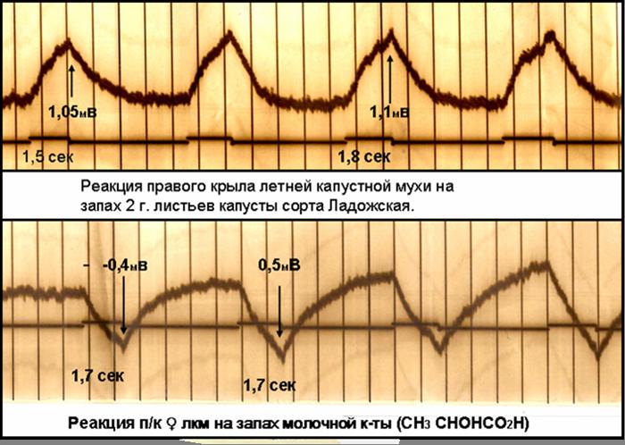 Фотоосциллограмма-2-10
