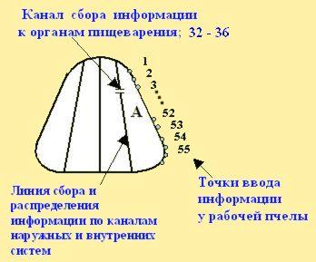 рис. 2. Спектр принимаемой информации приемника (А). BEEMODEL.NAROD.RU