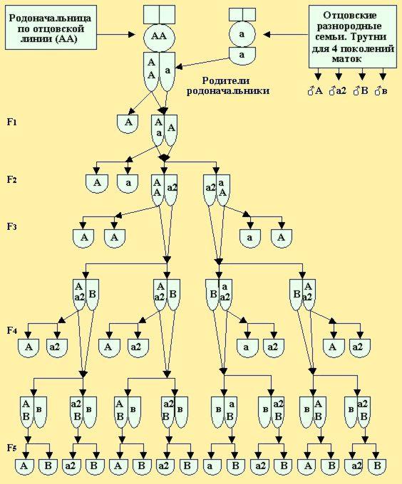 Схема ступенчатой пирамиды