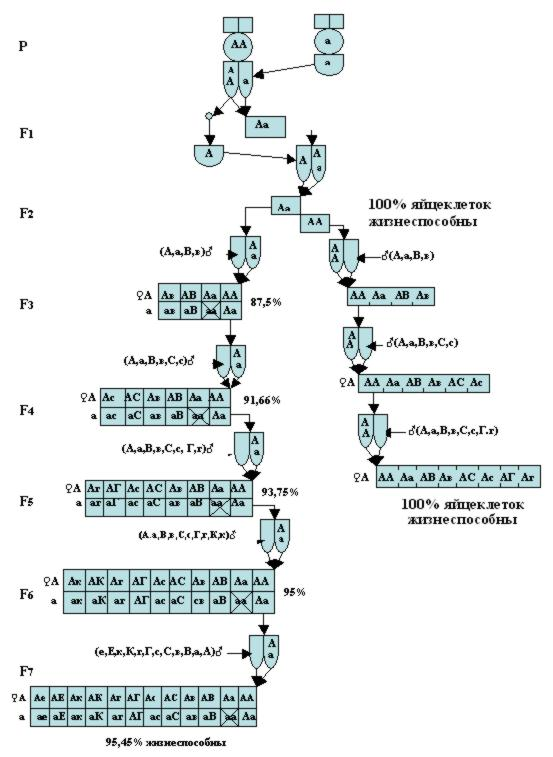 BEEMODEL.NAROD.RU Варианты спаривания гомозиготных и гетерозиготных маток пчёл с родственными трутнями