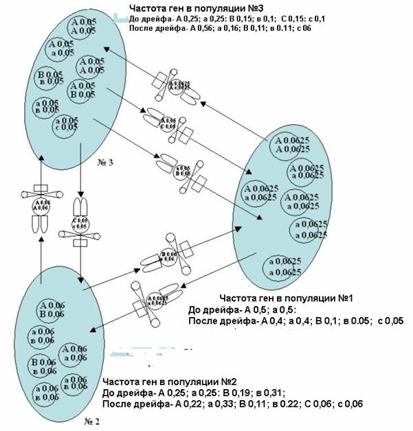 BEEMODEL.NAROD.RU Варианты дрейфа генов при роении