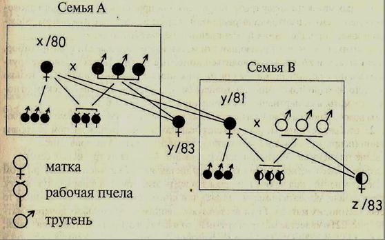 »Схема Рутнера